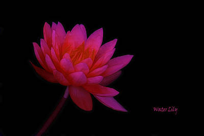 Outdoor Still Life Photograph - Water Lily by Tom York Images