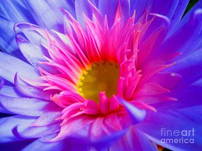 Photograph - Water Lily Vibrant by Angela Murray