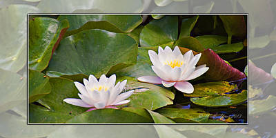 Photograph - Water-lily by Walter Herrit
