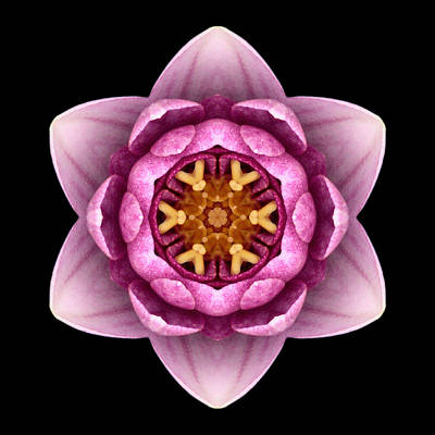 Photograph - Water Lily X Flower Mandala by David J Bookbinder