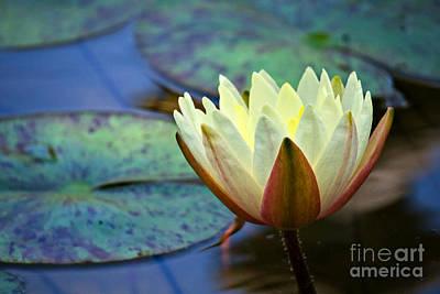 Polaroid Camera - Water Lily Yellow by Gary Richards