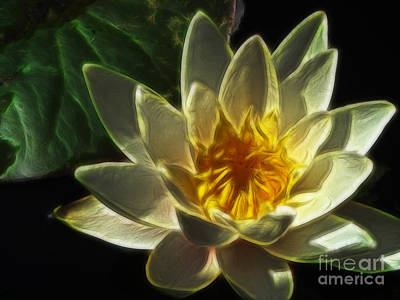 Photograph - Water Lily by Yvonne Johnstone