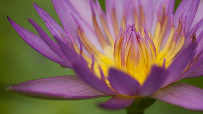 Photograph - Water Lily by Zoe Ferrie