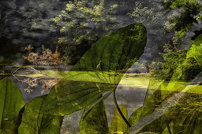 Nature Center Pond Digital Art - Water Plant With Bird Merged Image by Thomas Woolworth