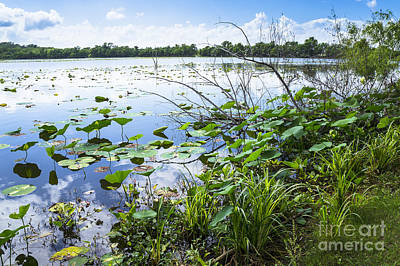 Water Plants And Their Landscape Art Print