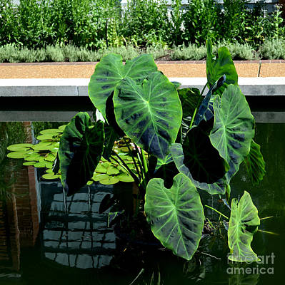 Photograph - Water Plants by Luther Fine Art