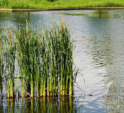 Photograph - Water Plants -  Reed Reflections - Luther Fine Art by Luther Fine Art