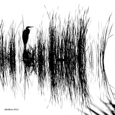 Photograph - Water Reeds by Dick Botkin