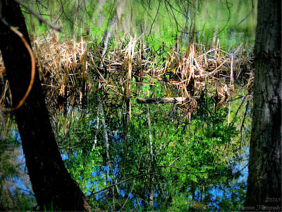 Water Reflection Under The Cattails Art Print by Aaron Burrows
