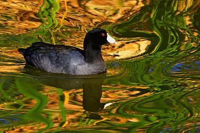 Photograph - Water Reflections by Ira Runyan