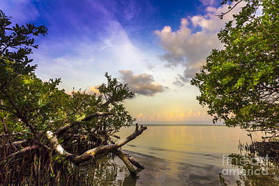 Marsh Photograph - Water Sky by Marvin Spates