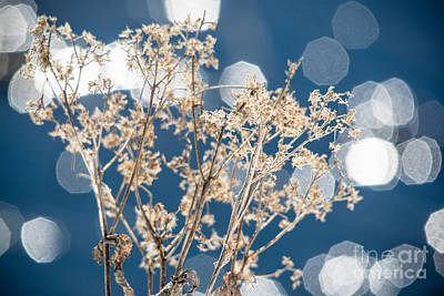 Photograph - Water Sparkles by Cheryl Baxter
