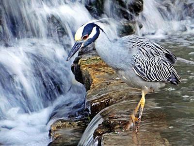 Photograph - Water Watch II by Tom DiFrancesca