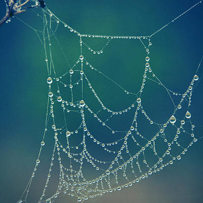 Photograph - Water Web by Beverly Stapleton