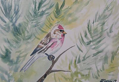 Watercolor - Common Redpoll Original