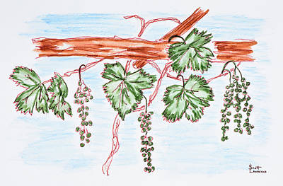 Watercolor Of Vines With Grapes, France Art Print