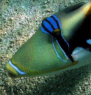 Hawaiian Fish Digital Art - watercolored Huma by Tony and Kristi Middleton