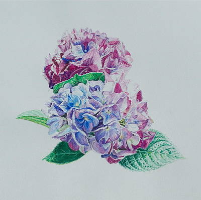 Painting - Watercolored Hydrangea by Michele Myers