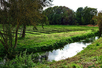 Watercress Photograph - Watercress Field by Olivier Le Queinec