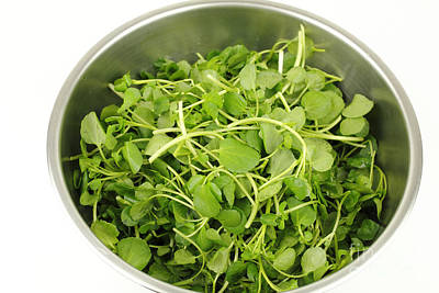 Photograph - Watercress In A Stainless Steel Bowl by Lee Serenethos
