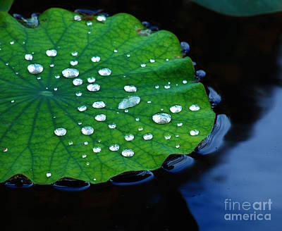Waterlilies Digital Art - Waterdrops On Lilypad by Nancy Mueller