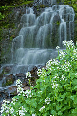 Waterfall And White Wildflowers Art Print by Howie Garber