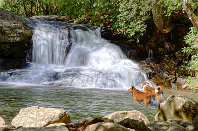 Digital Art - Waterfall Dogs by Bob Jackson