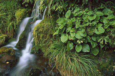 Waterfall Egmont Np New Zealand Art Print by Shaun Barnett