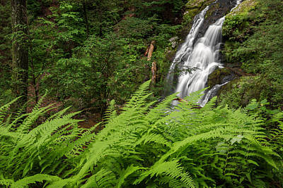 Fern Photograph - Waterfall Fern by Bill Wakeley