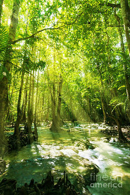 Flash Floods Photograph - Waterfall In Rainforest by Atiketta Sangasaeng