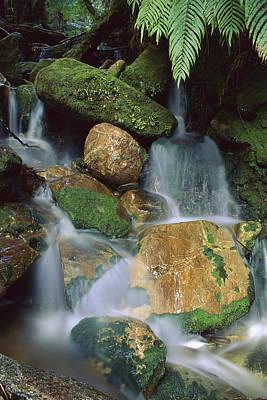 Waterfall Near Lake Mapourika Art Print by Shaun Barnett