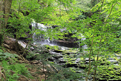 Waterfall Ricketts Glen State Park Pa Art Print