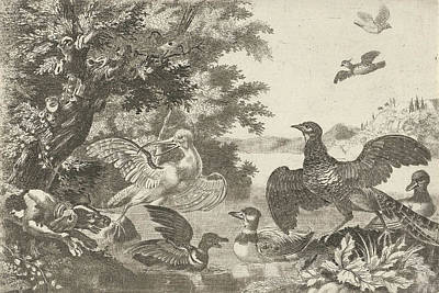 Waterfowl Drawing - Waterfowl And A Dog, Melchior D Hondecoeter by Melchior D' Hondecoeter