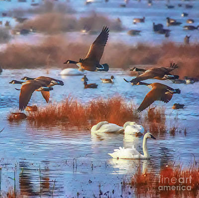 Photograph - Waterfowl - Duvet Cover Sized by Scott Hervieux