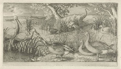 Waterfowl Drawing - Waterfowl In A Pond, Jan Van Londerseel by Jan Van Londerseel