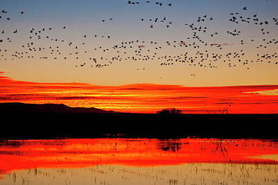 Roost Photograph - Waterfowl On Roost At Sunrise, Bosque by Larry Ditto