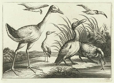Waterfowl Drawing - Waterfowl, Print Maker Pieter Van Lisebetten by Pieter Van Lisebetten And Wenceslaus Hollar And Francis Barlow