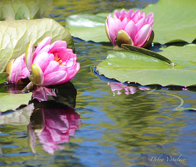 Photograph - Watergarden Lotus by Debra     Vatalaro