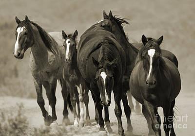 Wild Horses Photograph - Waterhole March II by Carol Walker