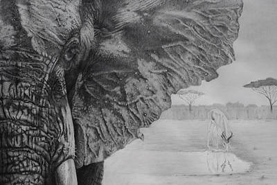 Elephant Pencil Drawing Drawing - Waterhole by Tim Dangaran