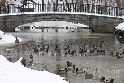 Ice In Water Photograph - Watering Hole Ducks Only by John Telfer