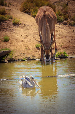 Photograph - Watering Hole by Matthew Onheiber