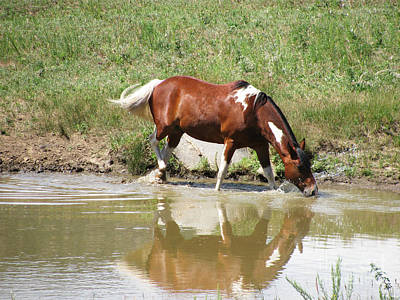 Photograph - Watering Hole by Steven Parker