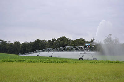 Photograph - Watering The Peanut Crop by rd Erickson