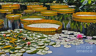 Photograph - Waterlilies All -- Version 2 by Byron Varvarigos