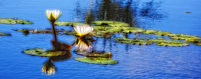 Photograph - Waterlilies by Carol Kinkead
