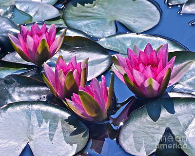 Photograph - Waterlilies In Bright Sunlight -- Version 2 by Byron Varvarigos