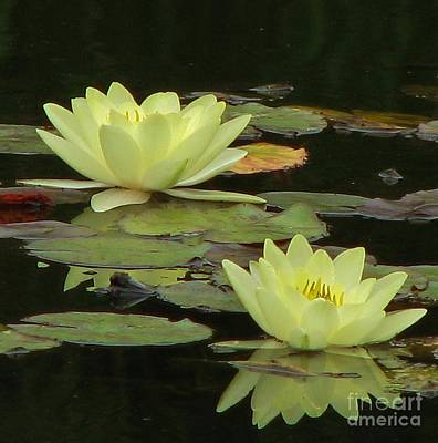 Photograph - Waterlilies by Michele Penner