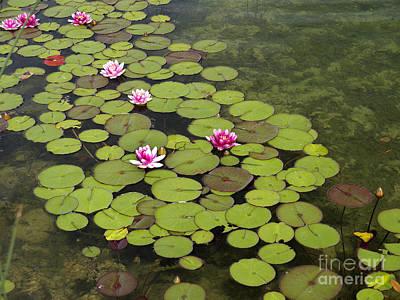 Photograph - Waterlilies Of Dutch Lake by Brenda Kean