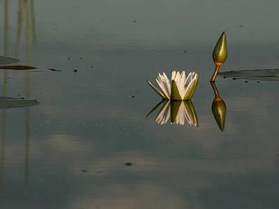 Photograph - Waterlilly 4 by Karen Zuk Rosenblatt